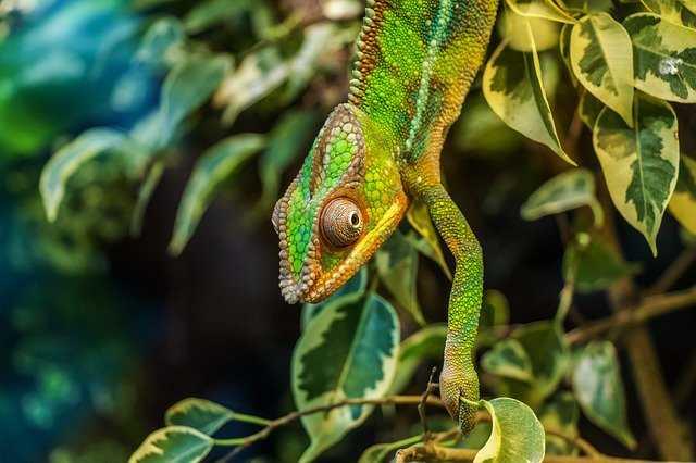 Madagaskar vahşi yaşam